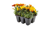 Mixed Herbs and Flowers 6pk