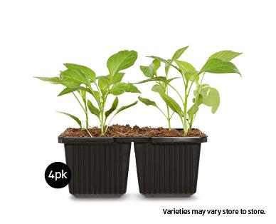 Vegetable Seedlings 4pk - ALDI Australia