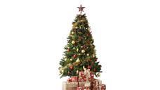 dramatic pine christmas tree 7ft 213cm. Black Bedroom Furniture Sets. Home Design Ideas